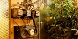 Vorig jaar 4.500 energiediefstallen bij hennepkwekerijen gestopt