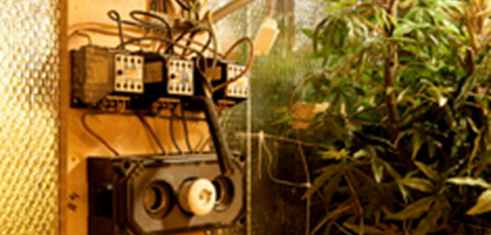 Vorig jaar 4.676 energiediefstallen bij hennepkwekerijen gestopt