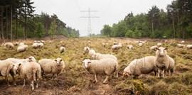 Uit Net NL: De natuurwaarde van het energienet